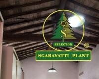 pad_sgaravatti_plant